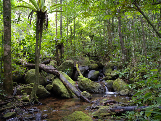Tropical Lowland Rainforest in Madagascar